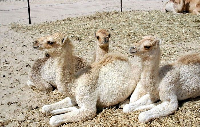 Madison Holland Camel Bite Case Ends With $155,000 Settlement