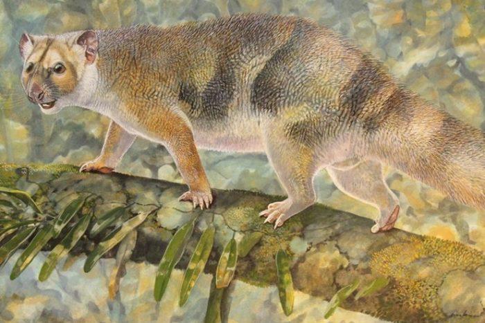 Micro Lion Sir David Attenborough Identified In Australia